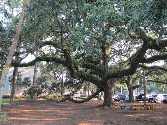 Harbour Town Lighthouse: Oak Tree Swing