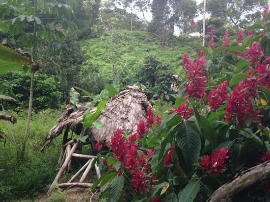 Penas Blancas, Kosta Rika: Penas Blanca