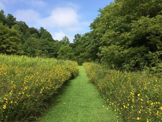 Snug Hollow Farm Bed & Breakfast: Beautiful fields