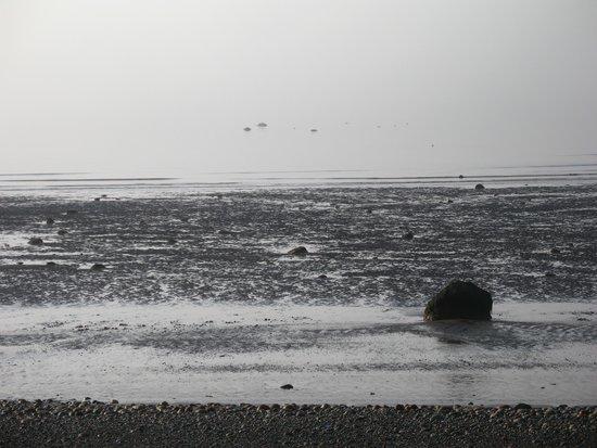 Weir Inn: Low Tide