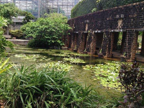 Tropical Dream Center : 園内の様子