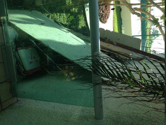 Oleo Cancun Playa : Vista de mi habitación