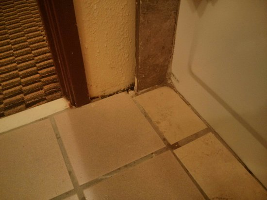 Quality Suites: Nasty mold on baseboard.