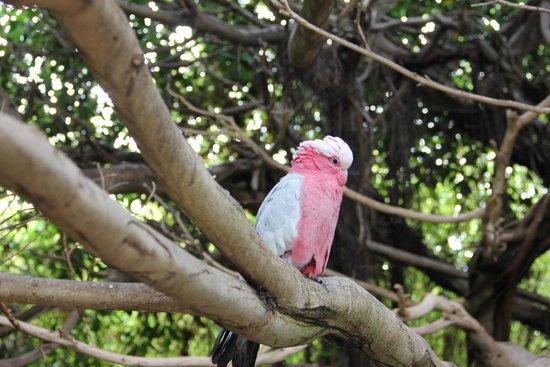 Loro Parque: попугайчики хороши