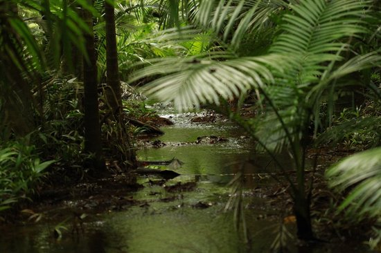 Lync-Haven Rainforest Retreat, Cabins, Camping & Wildlife Experience: Beautiful rainforest walks