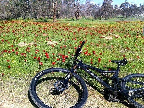 סיורי אופניים