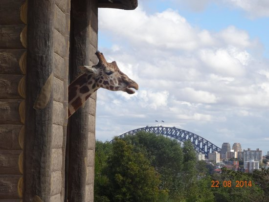 Taronga Zoo : Another view