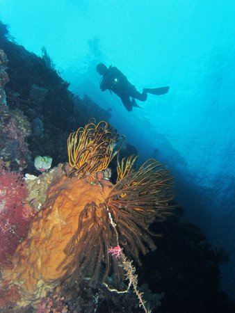 Bunaken National Marine Park: diving in muka kampung pier site, clear visibility, meet to huge eagle ray, a little bit current