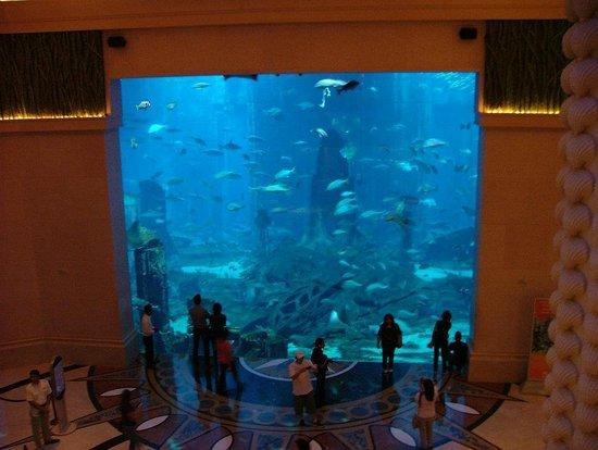hotel atlantis dubai chambre aquarium wroc awski informator internetowy wroc aw wroclaw. Black Bedroom Furniture Sets. Home Design Ideas