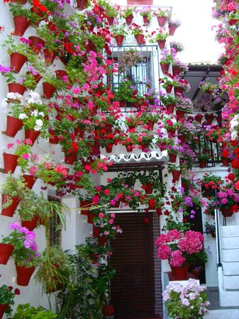 Patios de Córdoba: Flowers galore