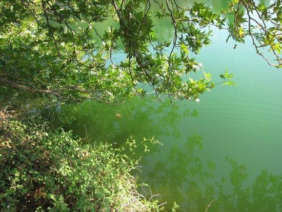 Eleonas: Черепаха в горном озере