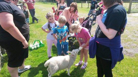 Ducky's Park Farm: Having fun feeding the babies x