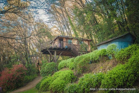 Orion B&B : treehouse