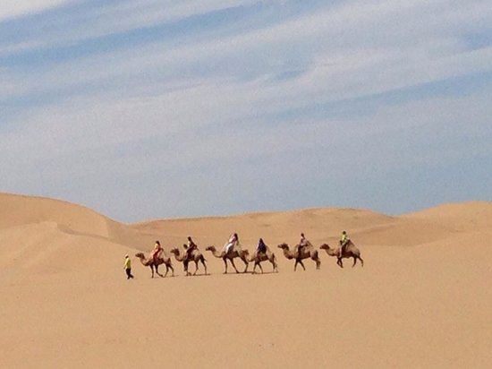 Whistling Dune Bay Tourist Scienc Spot: Camels in the desert