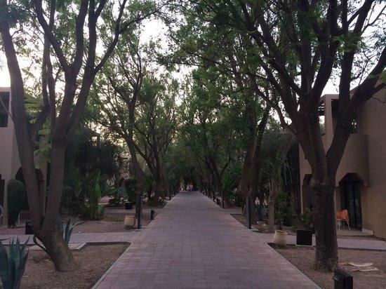 Pullman Marrakech Palmeraie Resort and Spa : L'allée vers les chambres