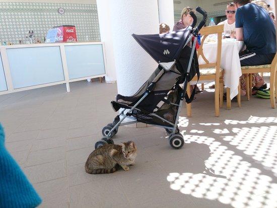 El Mouradi Djerba Menzel: les chats dans le restaurant