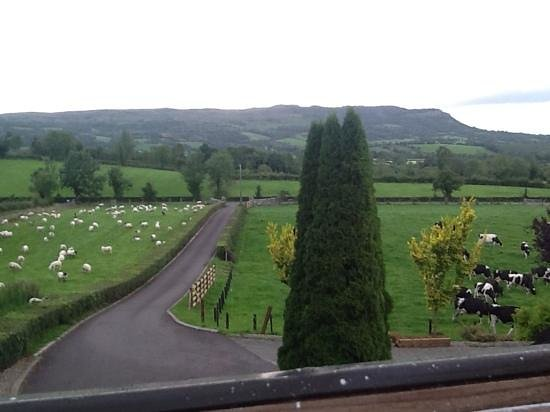 Abocurragh Farm Bed and Breakfast: .