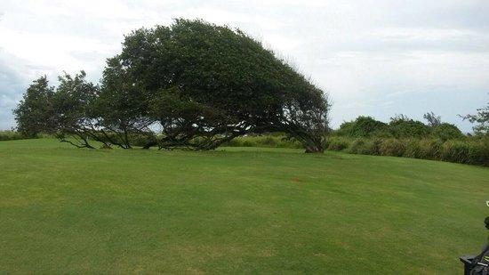 Royal Isabela : Golf course