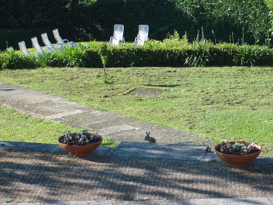 Quinta de Santo Antonio do Pombal: Jardins