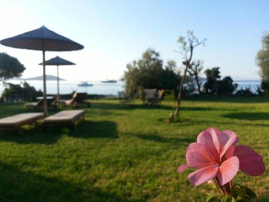 Angeliki Beach Hotel: Garden