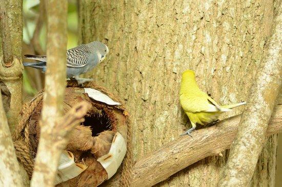 Thulhagiri Island Resort: Parrots