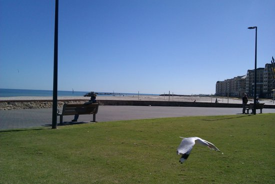 Glenelg Pier: lovely beach