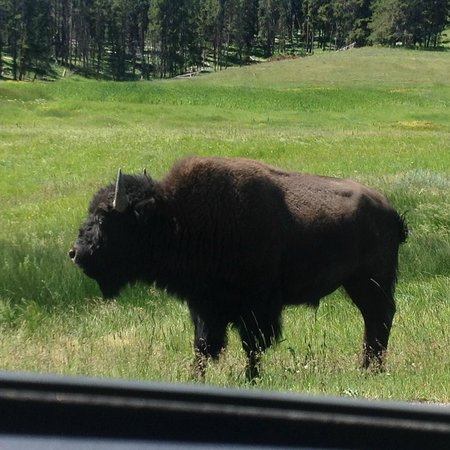Lake Lodge Cabins: Bison