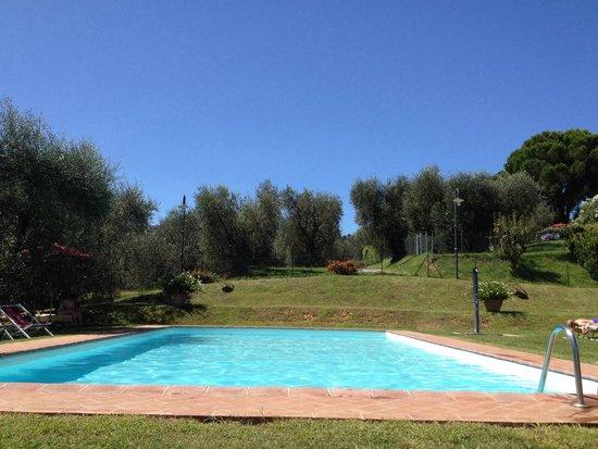 Agriturismo Vecchio Olivo: La piscina immersa tra gli ulivi
