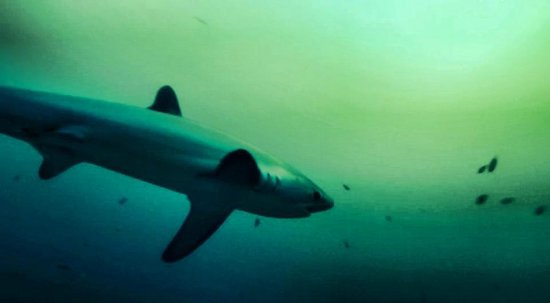 Sea Explorers Malapascua: I saw thresher sharks all the time we where diving at the site