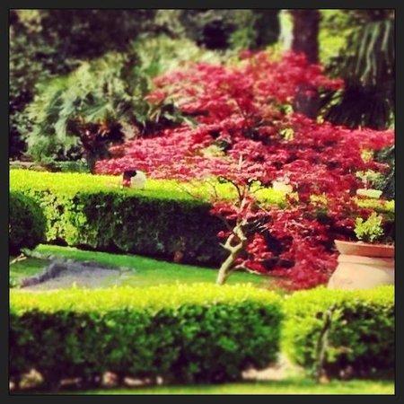 Villa Italia Nocera inferiore: Ooooh