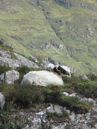 The Sheep and Wool Centre: PECORA SU UNO SCOGLIO