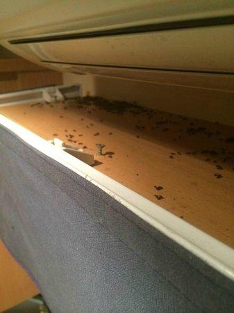 Camping La Nautique : Cadavres d'insectes