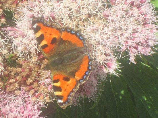 Lis-Ardagh Lodge: Flora & fauna wonderful