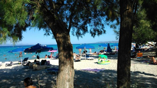 Pallini Beach Hotel: the trees go all the way to the sand of the beach