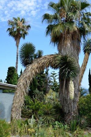 Jardi Botanic Marimurtra : Ботанический сад Маримутра