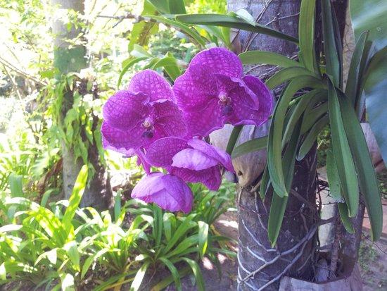 Paradise Beach Resort: Garden flower