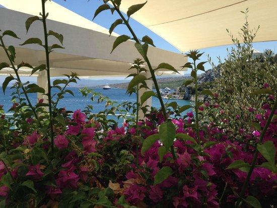 Hilton Bodrum Turkbuku Resort & Spa: Yeşil ve mavi....
