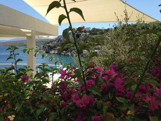 Hilton Bodrum Turkbuku Resort & Spa: Mavi deniz ve begonvil...