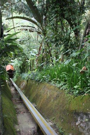 Nandini Bali Jungle Resort & Spa: Hop in !