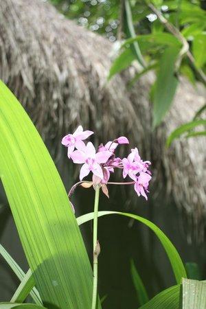 Nandini Bali Jungle Resort & Spa: Flowers