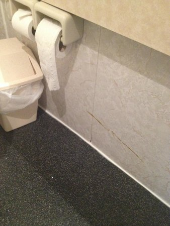 Britannia Country House Hotel : Disgusting