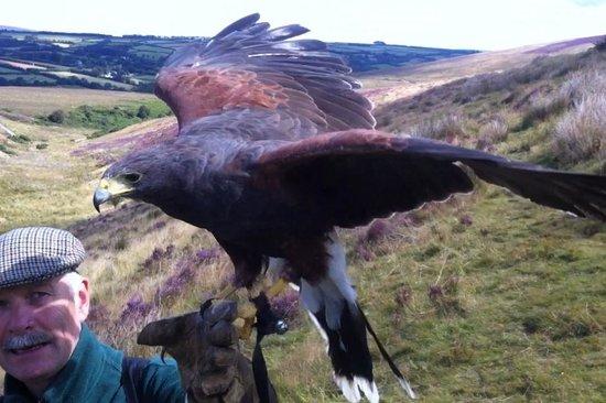 North Devon Hawk Walks: *