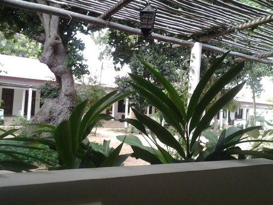 Mediterraneo Hotel & Restaurant: Great plants