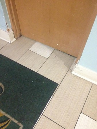 Quality Inn Historic East - Busch Gardens Area : They crawl under doors