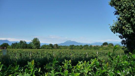 Albergo Quattro Pini: Mooi uitzicht