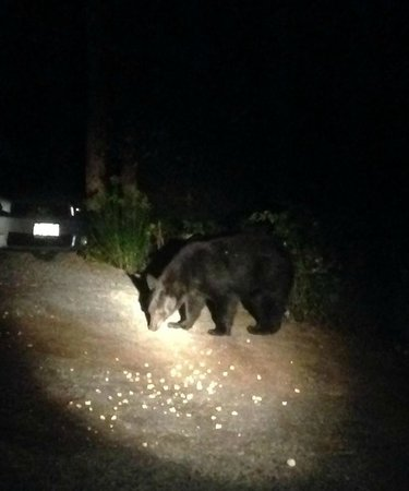 Old Forge Camping Resort: Don't feed the bears like our idiot neighbors
