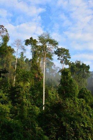 Tabin Wildlife Resort : Tabin Wildlife Reserve (dawn drive from nearby resort)