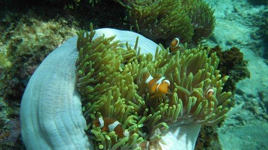 Coral View Island Resort: nemo