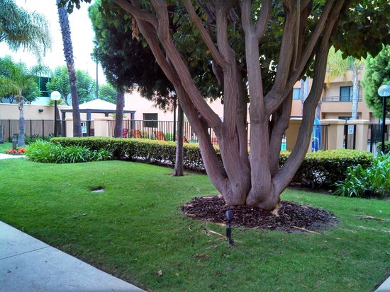 Courtyard Los Angeles Torrance/South Bay: The outside of the pool area.
