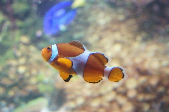 Aquarium La Rochelle : Némo